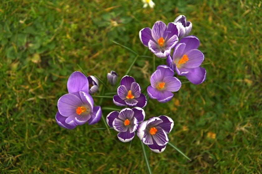 Если весна не торопится, как создать весеннее настроение | Блог Радость в каждом дне