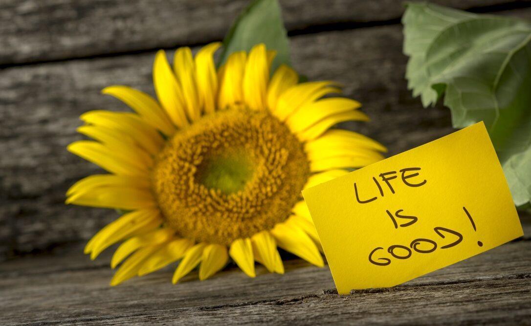 Блог Радость в каждом дне